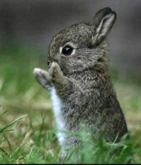 conejo bebe