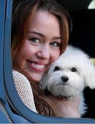 El perro de Miley Cyrus ¡es hermosaaa!