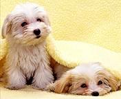 perritos cualquiera