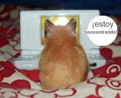 hamster jugando a las maquinitas